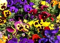 Tavaszi színek
